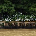 Aceptadas  Orilla de hortensias- CLAUDIO DANIEL MURO