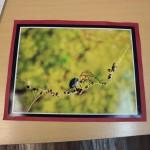 La araña de seda dorada-CORTINE MICAELA