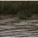 MENCION DE JURADO Baño en el arroyo SERGIO CONZON
