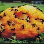 Mencion- naranja y Negro-Juan Penzotti