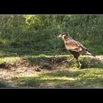 a hacer el nido