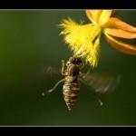 moscabeja libando